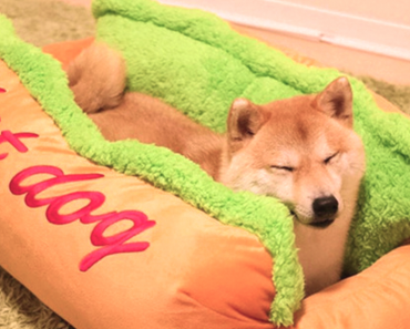 This Hot Dog Bed Will Make Your Pet Even More Adorable